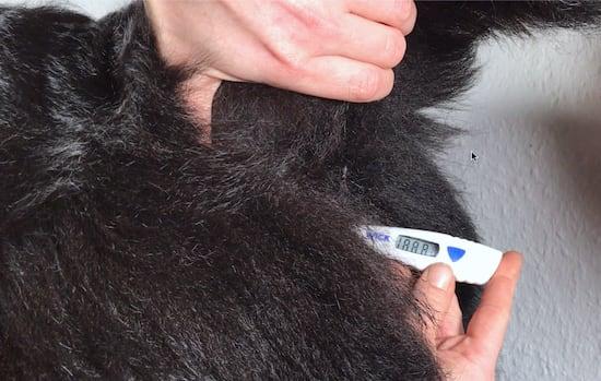 wie kann man fieber ohne thermometer messen