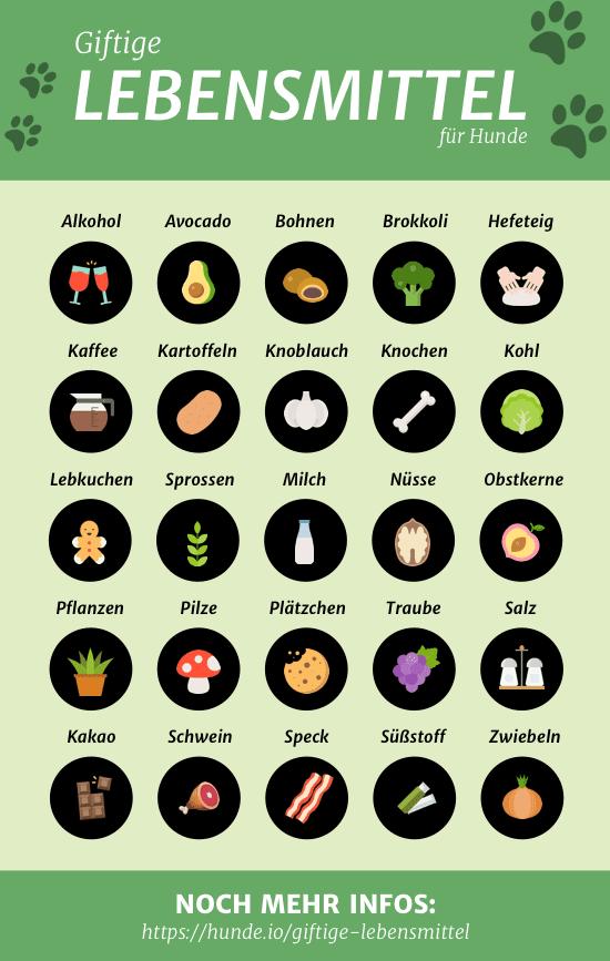Giftige Lebensmittel — Hunde.io